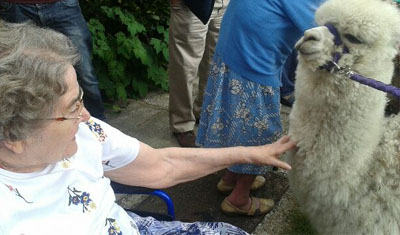 A resident with an alpaca