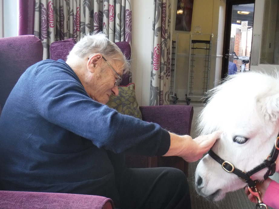 Ponies visit our Essex care home New Copford Place
