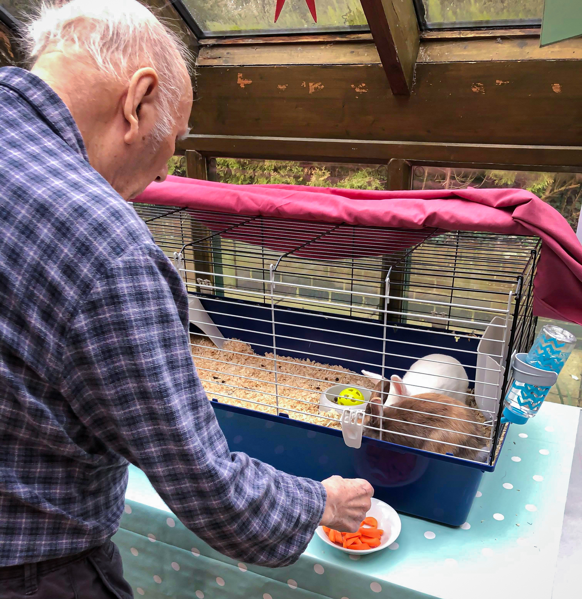 A resident feeding a white and brown rabbit