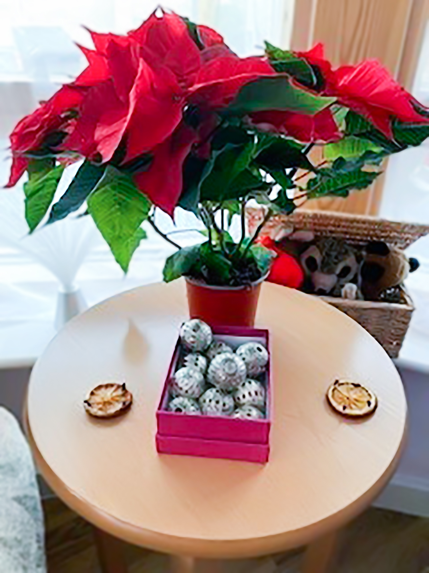 A picture of Poinsettias plants used during the festive Namaste session